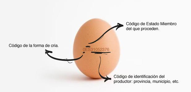 huevos-nutricion-nutribalanç-castellon-00