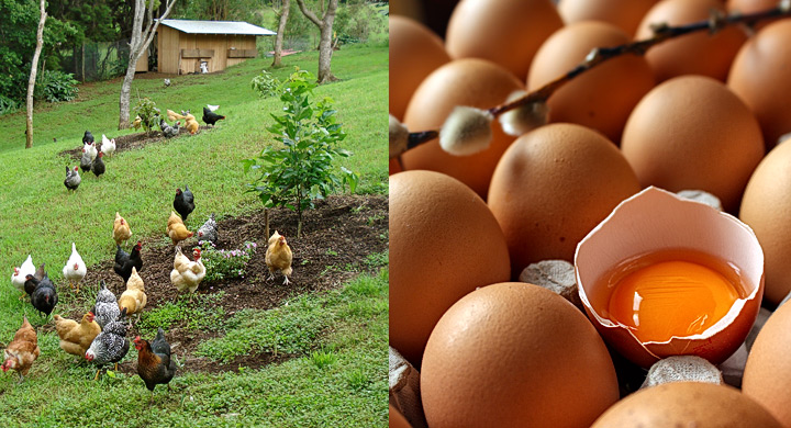 huevos-nutricion-nutribalanç-castellon-01